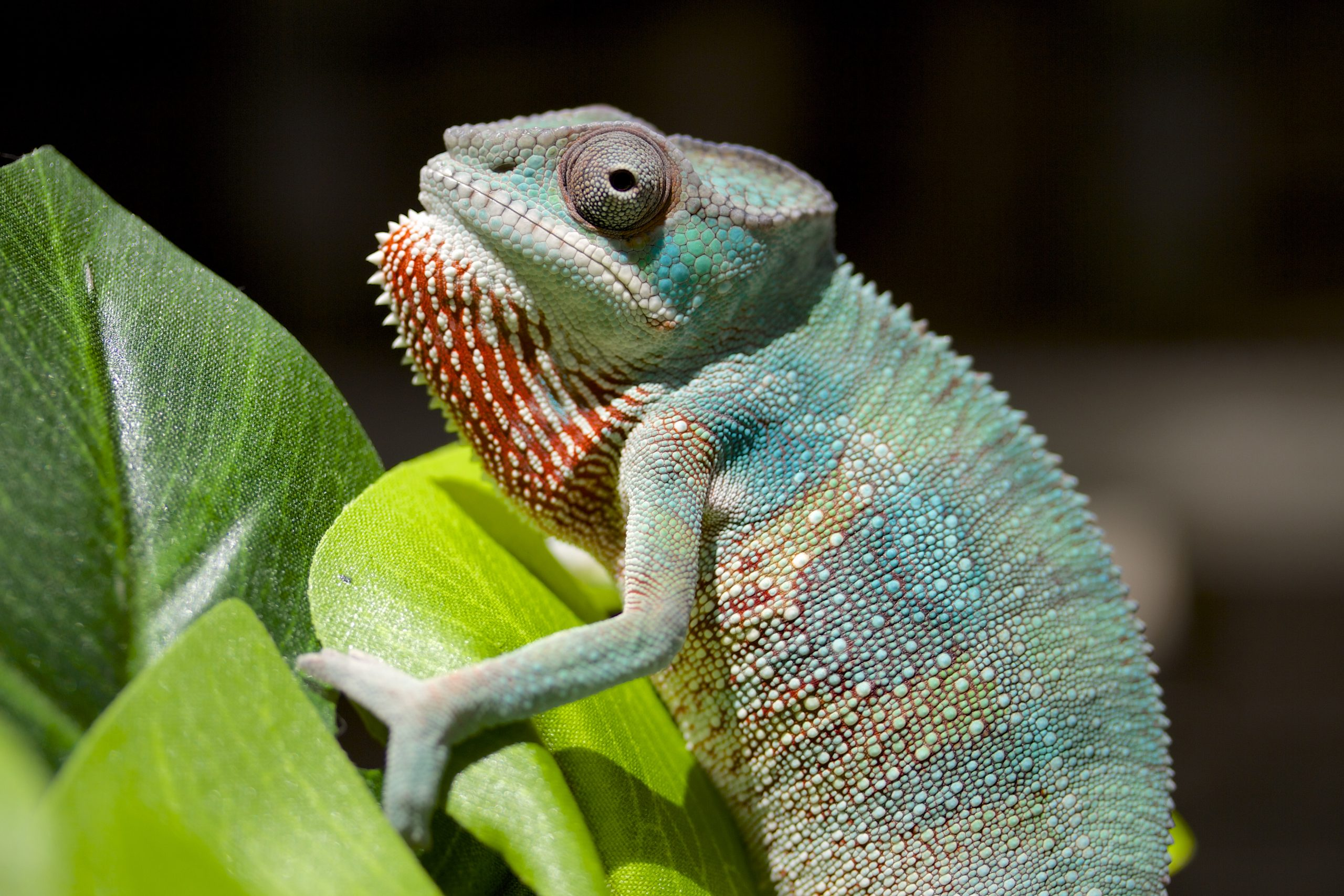 A chameleon—or is it a student?—asks how it might help us.